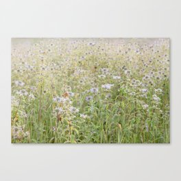 Wildflowers in the morning Canvas Print