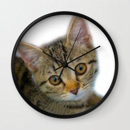 Kitten is dreaming Wall Clock