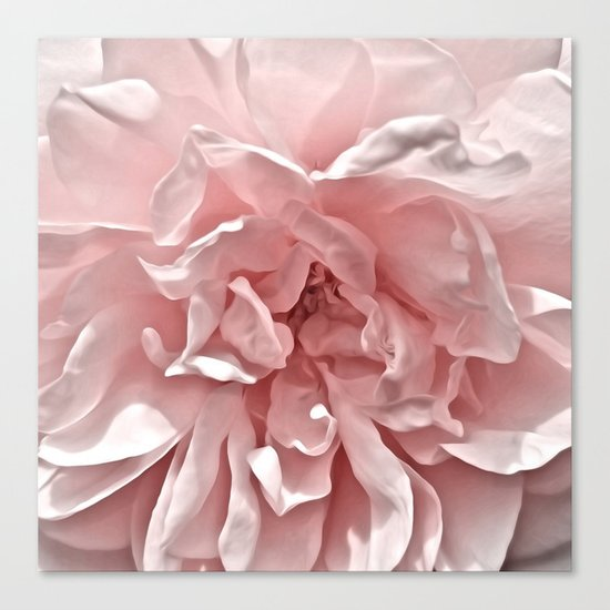 Pink Blush Rose Canvas Print