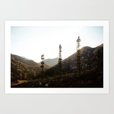 sunset in angeles crest forest Art Print