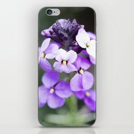 Dame's Rocket Flowering iPhone Skin