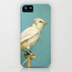 Albino Blue Jay - Square Format Natural History Bird Portrait iPhone (5, 5s) Slim Case