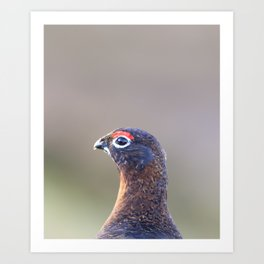 Red grouse Art Print
