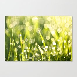 One Summer Morning Canvas Print