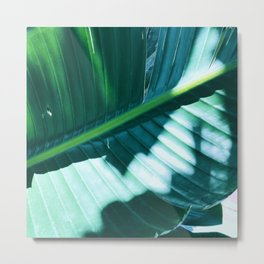 Bird of Paradise Leaf in Dappled Sunlight and Shadow Metal Print