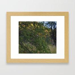 Cardenal in tree Framed Art Print