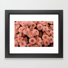 Mums Framed Art Print