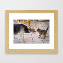 Curiouser And Curiouser Framed Art Print