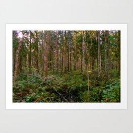 Morning sun in a wilderness forest Art Print