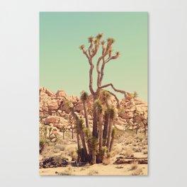Joshua Tree#2  Canvas Print
