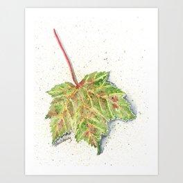 MAINE MAPLE LEAF Art Print