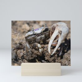 Fiddler Crab Mini Art Print