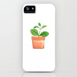 Hoya Obovata iPhone Case