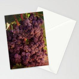 Vineyard Vines Stationery Cards
