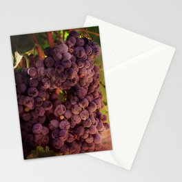 Vineyard Vines Stationery Cards