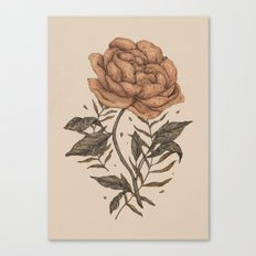 Peony and Ferns Canvas Print