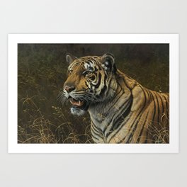 Tiger Portrait by Alan M Hunt Art Print