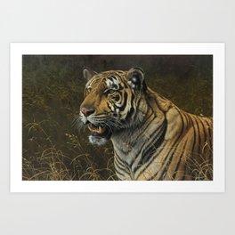 Tiger Portrait by Alan M Hunt Art Print