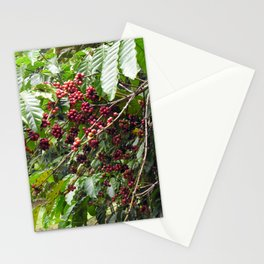 Coffee Shrub Pant Branch Coffee Berries Stationery Cards