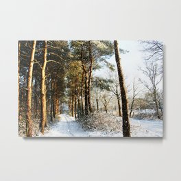 Forest Snow Scene Metal Print