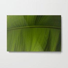 Tropical Leaf Closeup Metal Print