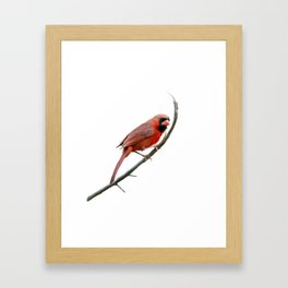 Male Northern Cardinal watercolor painting Framed Art Print