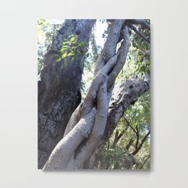 Twisted ficus forest Metal Print