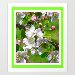 Green--yellow  White Pinkish Apple Blossoms. Art Print