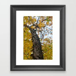Autumn in the Catskill Mountains Framed Art Print
