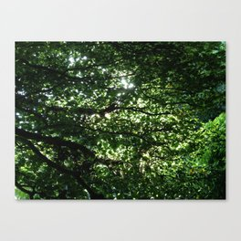 Wall of Leaves Canvas Print