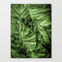 Painted Green Monstera palm leaves by Brian Vegas Canvas Print