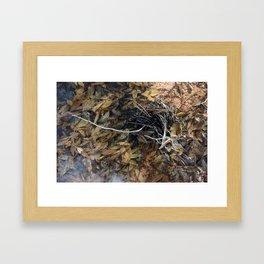 jetsam Framed Art Print