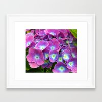 hydrangea Framed Art Prints featuring Hydrangea by Trevor Jolley