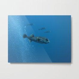 Porcupine fish balloons Metal Print