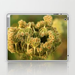 Queen Anne's Lace Flower About to Bloom Laptop & iPad Skin