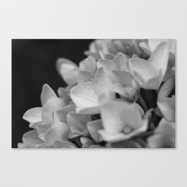 Boquet of black and white Canvas Print