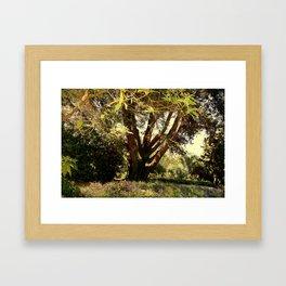 Summer shadow Framed Art Print
