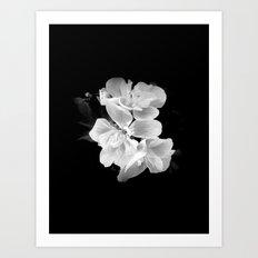 geranium in bw Art Print