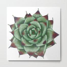 Echeveria colorata Metal Print