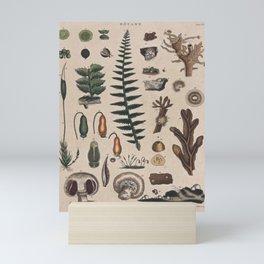 Botany Chart Mini Art Print