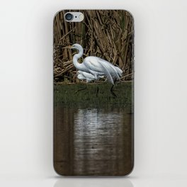 Great and Snowy Egrets, No. 3 iPhone Skin