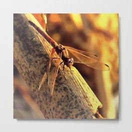 Elegant Red Darter Dragonfly Metal Print
