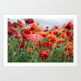 poppy field #society6 #decor #buyart Art Print