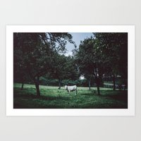 bull Art Prints featuring Bull by Tomas Hudolin