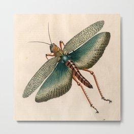Big Grasshopper Metal Print