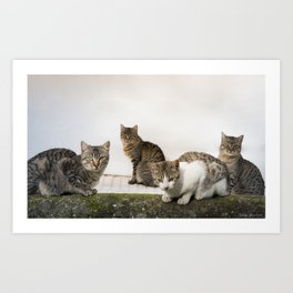 Picture of cats Art Print