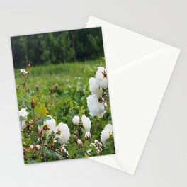 White wild roses Stationery Cards
