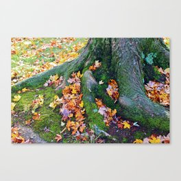 Roots And Leaves Canvas Print