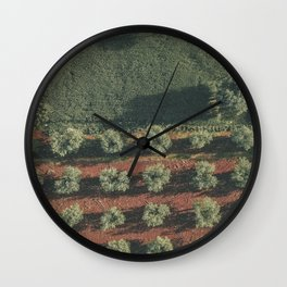 Aerial photo, nature textures, drone photography, olive trees, Apulia, Italian countryside Wall Clock