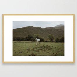 Wild Horse - The Isle of Arran Framed Art Print